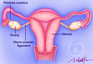 Image hotlink - 'http://www.bushparty.com/img/hockeylogos/2005/ovulation-ovaries.jpg'